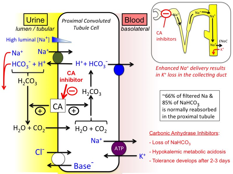Carbonic Anhydrase Inhibitor Pharmacology