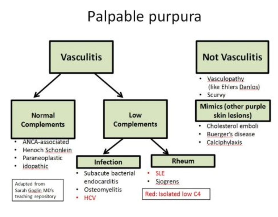 Palpable Purpura - Rash Algorithm #Diagnosis #Dermatology