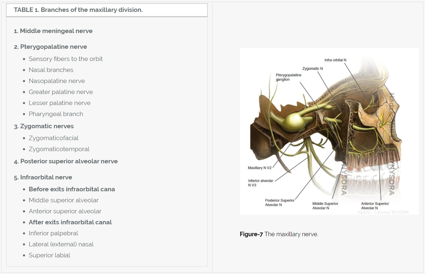 The Maxillary Nerve Block Anatomy The Maxillary Nerve Exits The