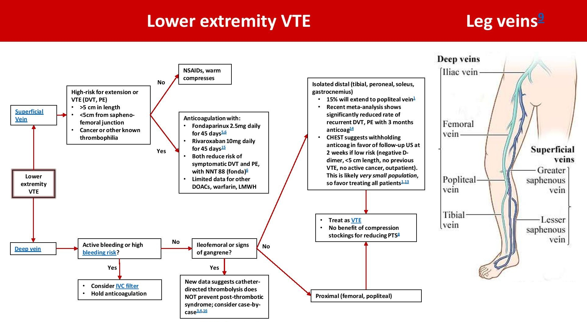Lower Extremity Venous Thrombosis Management And Anatomy Deep