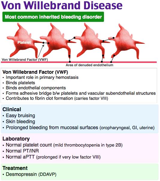 Von Willebrand Disease - Most common inherited bleeding disorder  Clinical   • Easy bruising   •