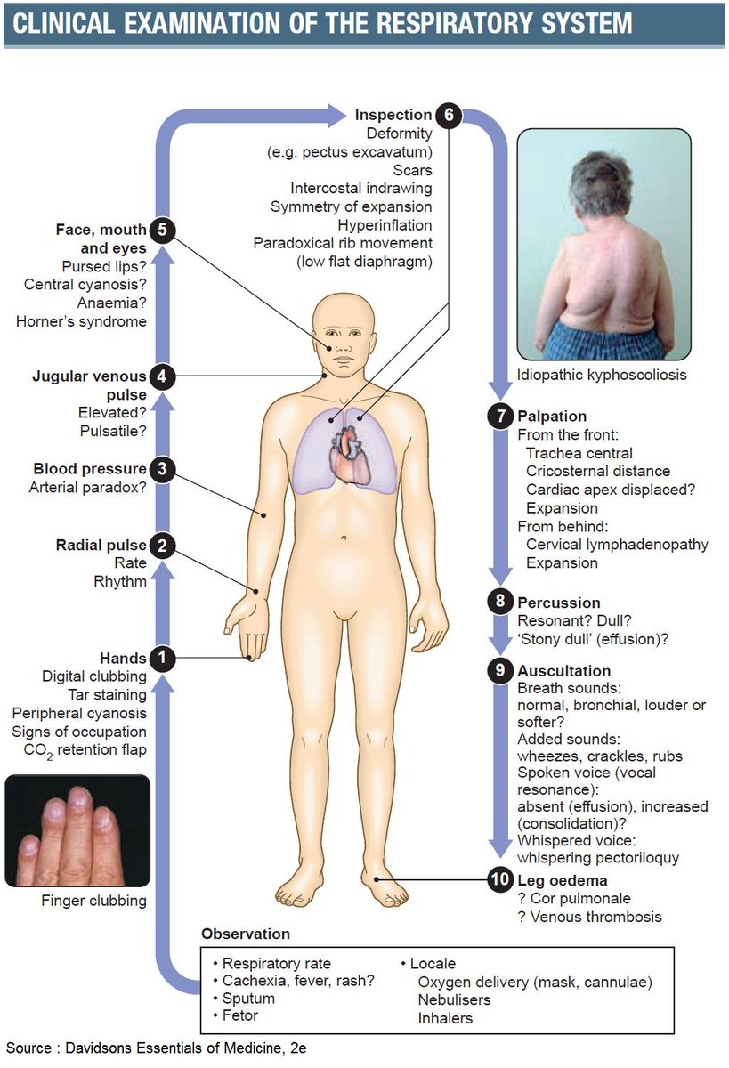 Clinical Examination of the Respiratory System