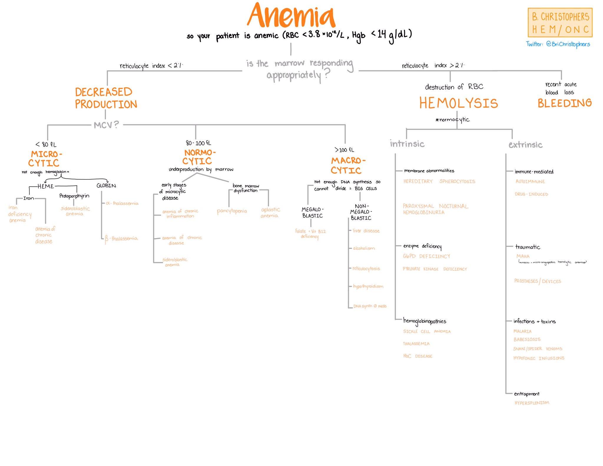 Anemia - Diagnostic Differential Algorithm  - Briana Ruíz Christophers @BriChristophers  #Anemia #Algorithm #Diagnosis #Hematology #Differential