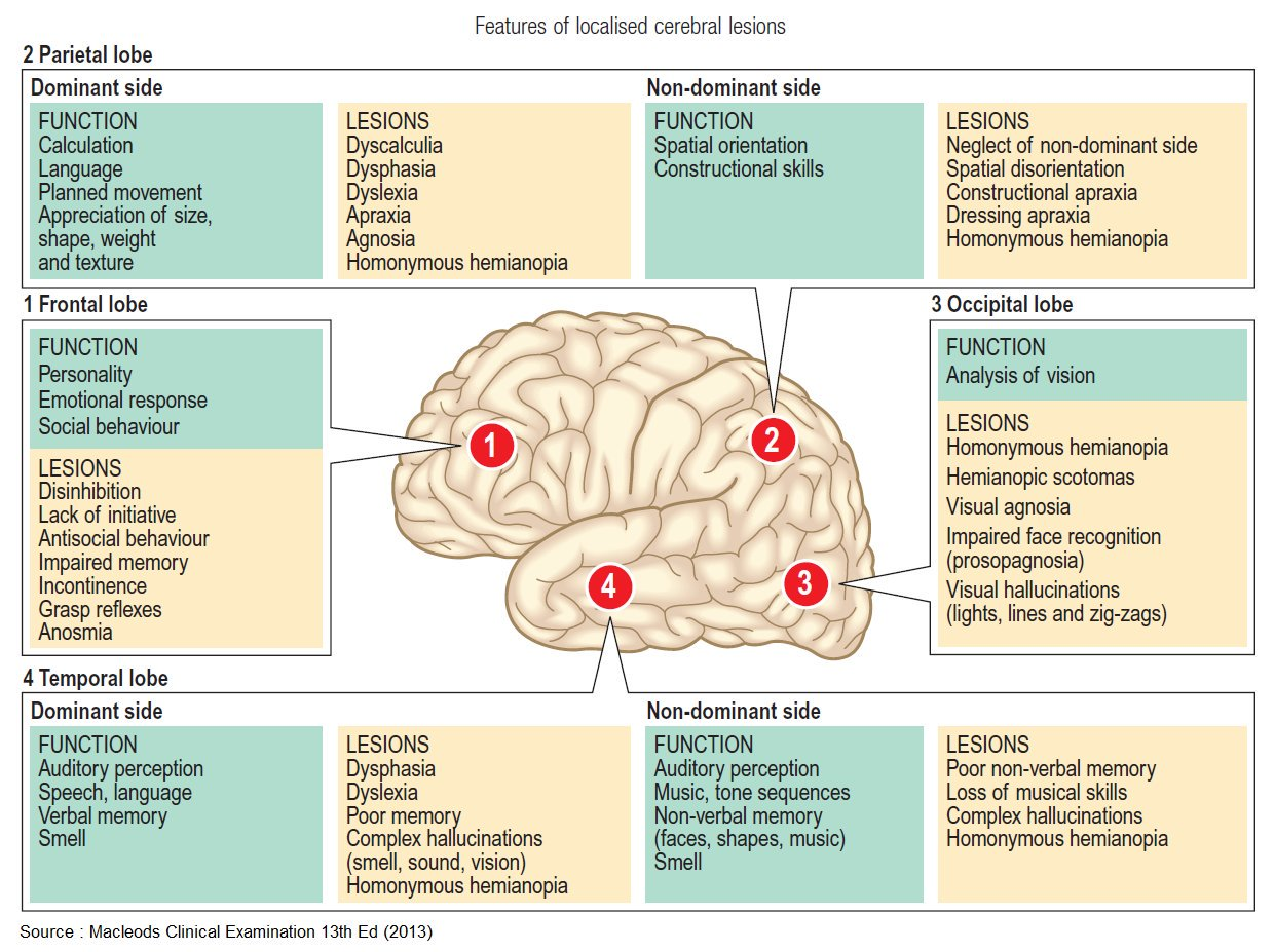 Features of localised cerebral lesions #cerebral ...   GrepMed