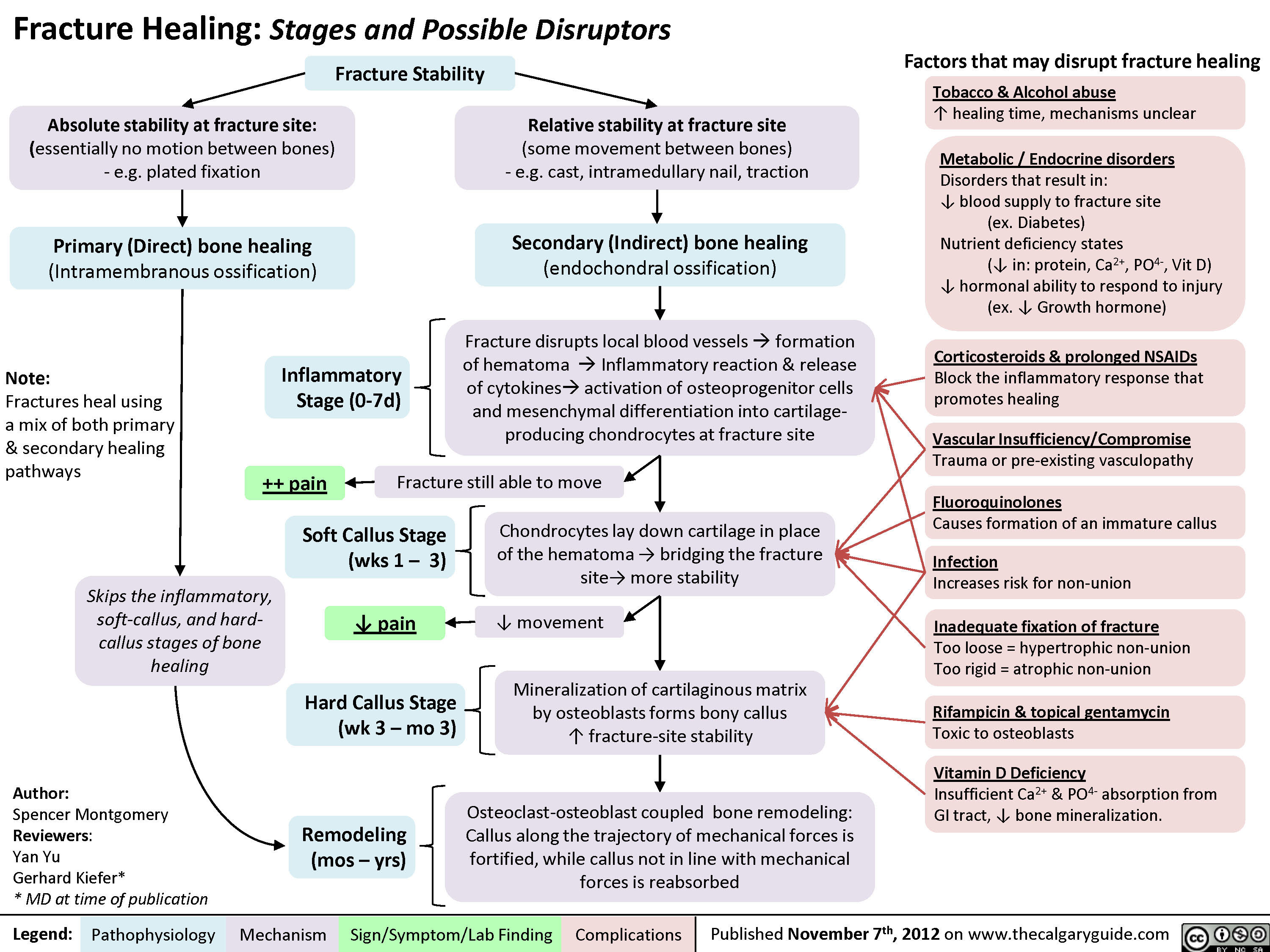 Fracture Healing And Disruptors Of This Process Inflammatory