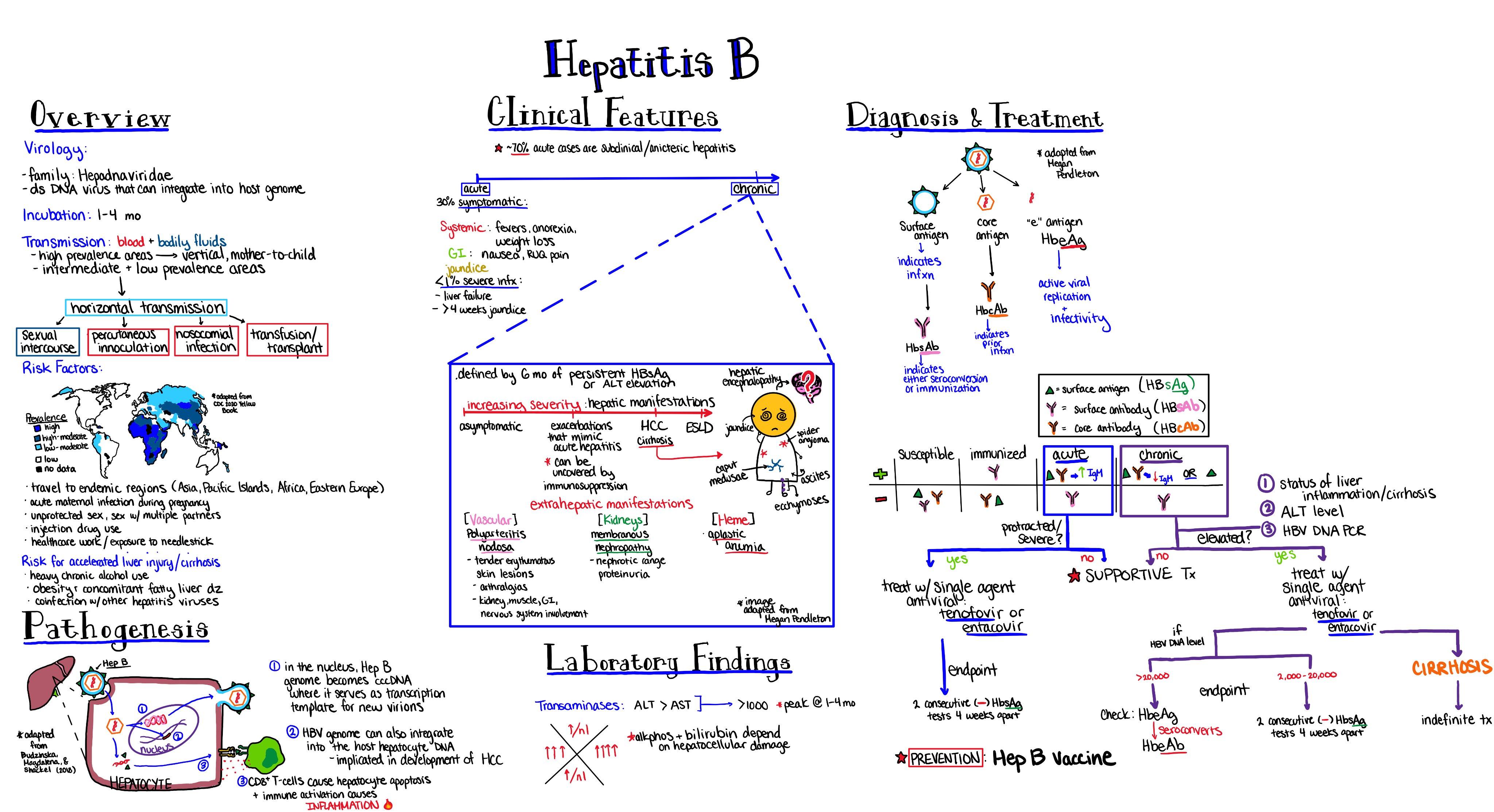 Ciroza hepatica | consilier-dezvoltare-personala.ro