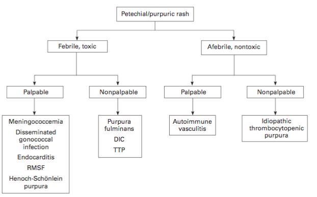 An Approach to the Unknown Rash: Petechial-Purpuric Rash